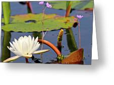 Water Flowers Greeting Card