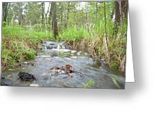 Water Flows After A May Rain Greeting Card