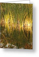 Water Grass In Sunset Greeting Card