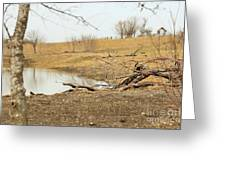 Water Hole 006 Greeting Card