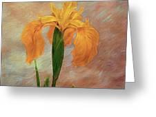Water Iris - Textured Greeting Card