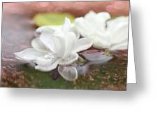 Water Lilac Greeting Card