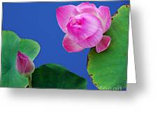 Water Lili Greeting Card