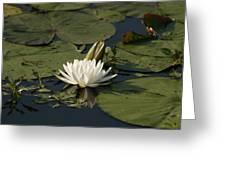 Water Lilies And Pads Greeting Card