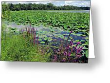 Lotus Flowers Forever Greeting Card