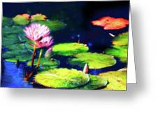 Water Lilies Greeting Card by Harry Spitz