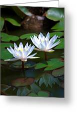Water Lilies II Greeting Card