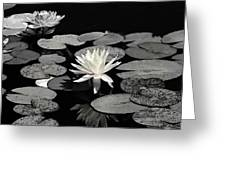 Water Lilies In Black And White Greeting Card