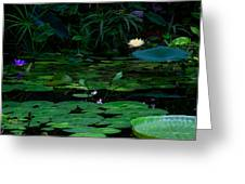 Water Lilies In The Pond Greeting Card