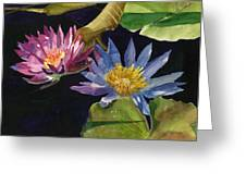 Water Lilies Greeting Card by Lynne Reichhart