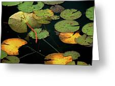 Water Lilies No 1 Greeting Card