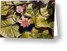 Water Lilies On The Ringdijk Greeting Card