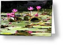 Water Lilies Tam Coc  Greeting Card