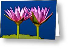 Water Lilies Touching Greeting Card