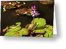Water Lillies At Central Park Greeting Card