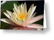 Water Lilly 1 Greeting Card