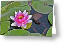 Water Lilly  And Lilly Pads Greeting Card