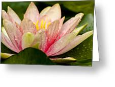 Water Lilly At Eye Level Greeting Card