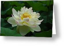 Water Lilly Dancing Greeting Card