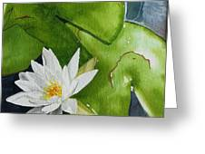 Water Lilly Greeting Card by Gigi Dequanne
