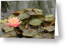 Water Lilly In Summer Greeting Card