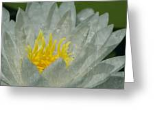 Water Lilly Morph Greeting Card