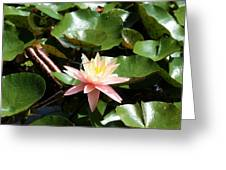 Water Lilly With Dragonfly Greeting Card