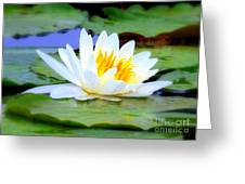 Water Lily - Digital Painting Greeting Card