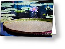 Water Lily - Water-platter Textured Greeting Card