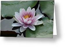 Water Lily 1 Greeting Card