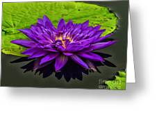 Water Lily 15-2 Greeting Card