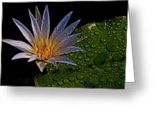 Water Lily 2 Greeting Card by Chaza Abou El Khair