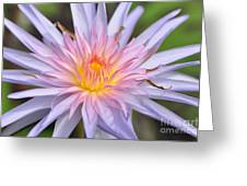 Water Lily  20 Greeting Card
