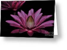 water lily 27 Dark Pink Night Blooming Water Lily Greeting Card