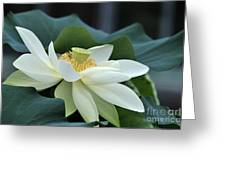 water lily 34 Yellow Lotus I Greeting Card