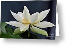 Water Lily 36 Greeting Card