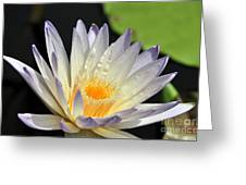 water lily 48 Green Smoke Greeting Card