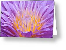 water lily 55 Ultraviolet Greeting Card