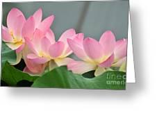 water lily 57 Pink Lotus Greeting Card