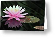 water lily 92 Sunny Pink Water Lily with Lily Pad Greeting Card