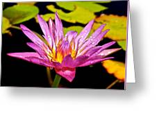 Water Lily After Rain 2 Greeting Card