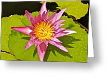 Water Lily After Rain 3 Greeting Card