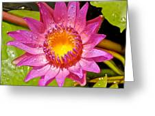 Water Lily After Rain 4 Greeting Card