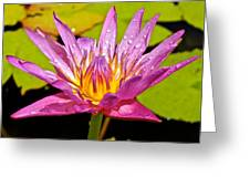 Water Lily After Rain Greeting Card