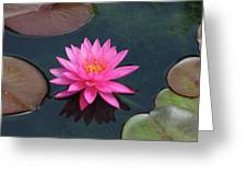 Water Lily - Afternoon Delight Greeting Card