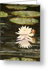 Water Lily And Pads Greeting Card