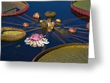 Water Lily And Platters Greeting Card