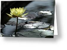 Water Lily And Silver Leaves Greeting Card