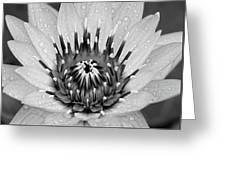 Water Lily B/w Greeting Card