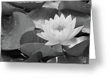 Water Lily - Burnin' Love 13 - Bw Greeting Card